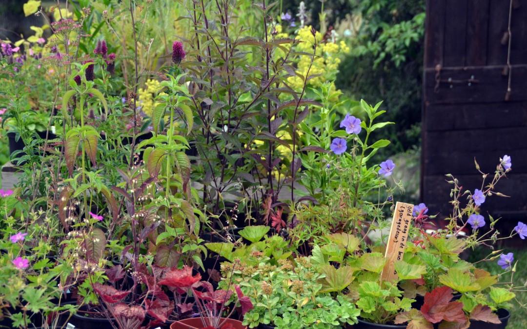 Opruiming vaste planten